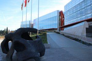 MEH en Burgos - escultura del Cráneo del Museo de la Evolución Humana de Burgos Museo de la Evolución Humana Burgos Galería de los Homínidos